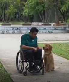Campanha arrecada doação para treinar cães que ajudam cadeirantes